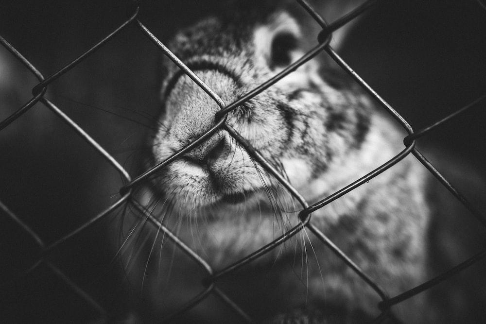 grayscale photo of animal beside fence