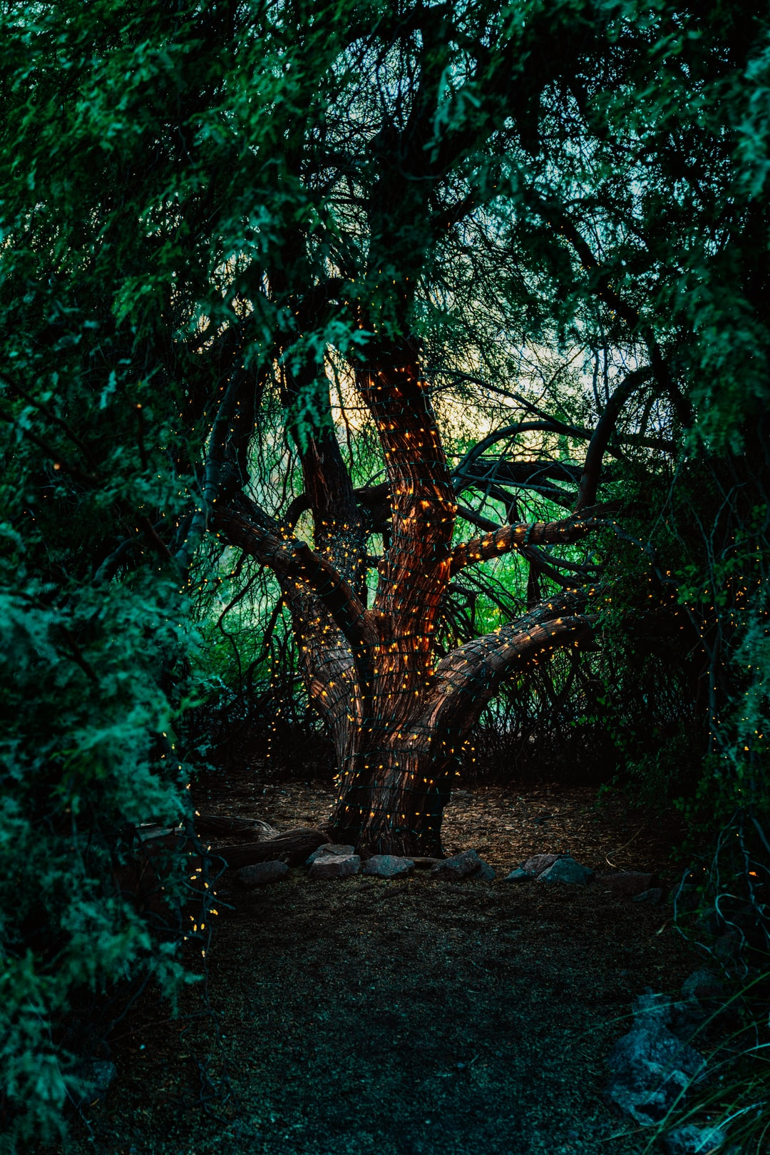 Bright orange lights wrapped around a tree look like fireflies in this dark coniferous forest.