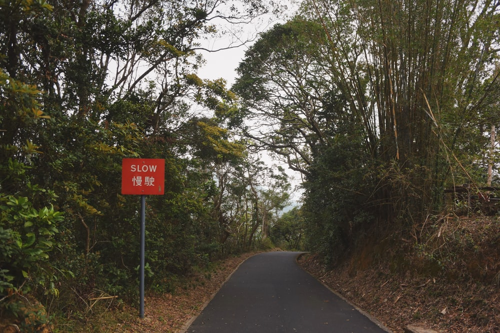 gray road surrounded with green trees with slow road sign