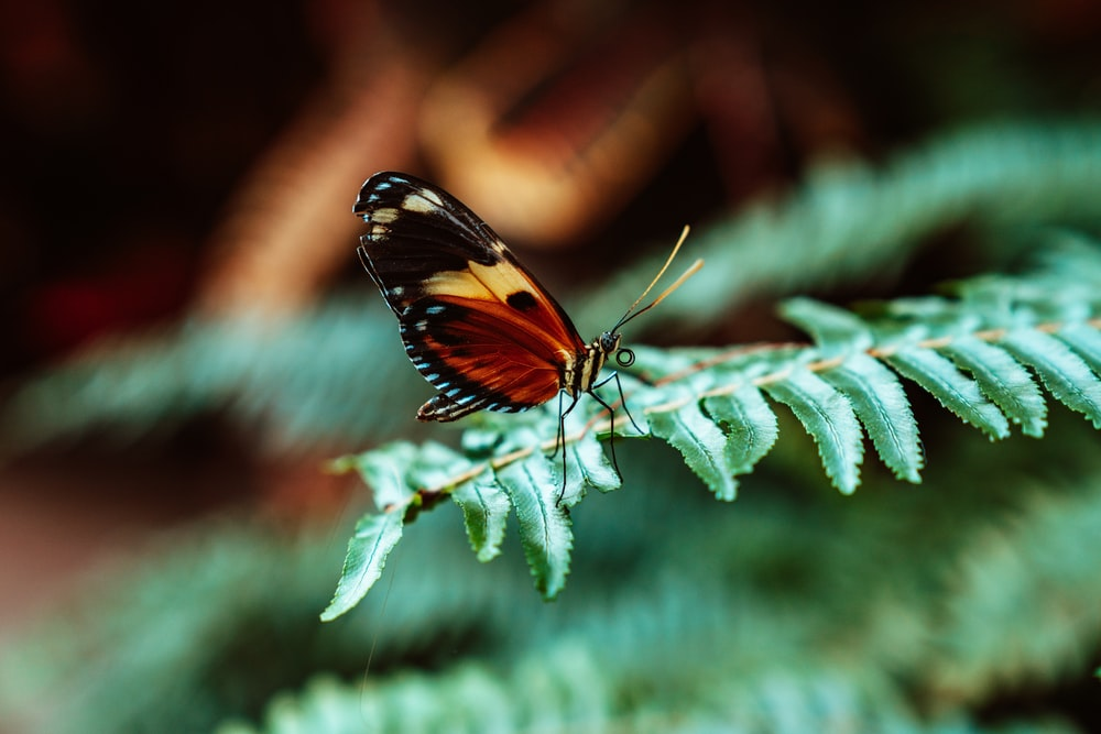 selective focus photography of black and brown butterfly on green leaf