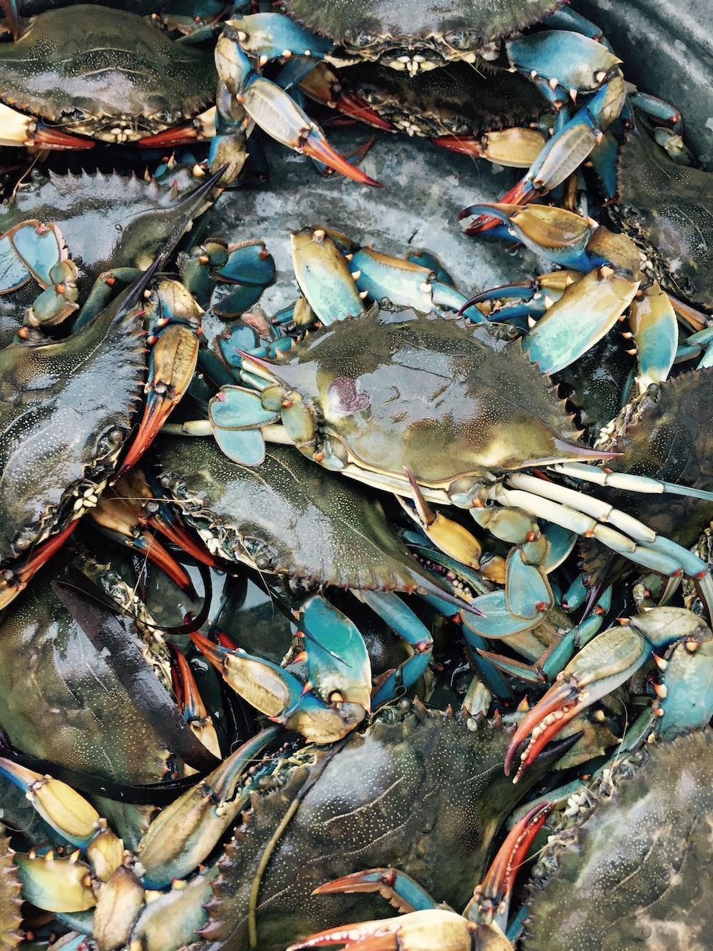 gray crabs lot
