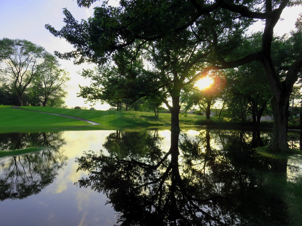 sun rays coming through green field and trees near body of water