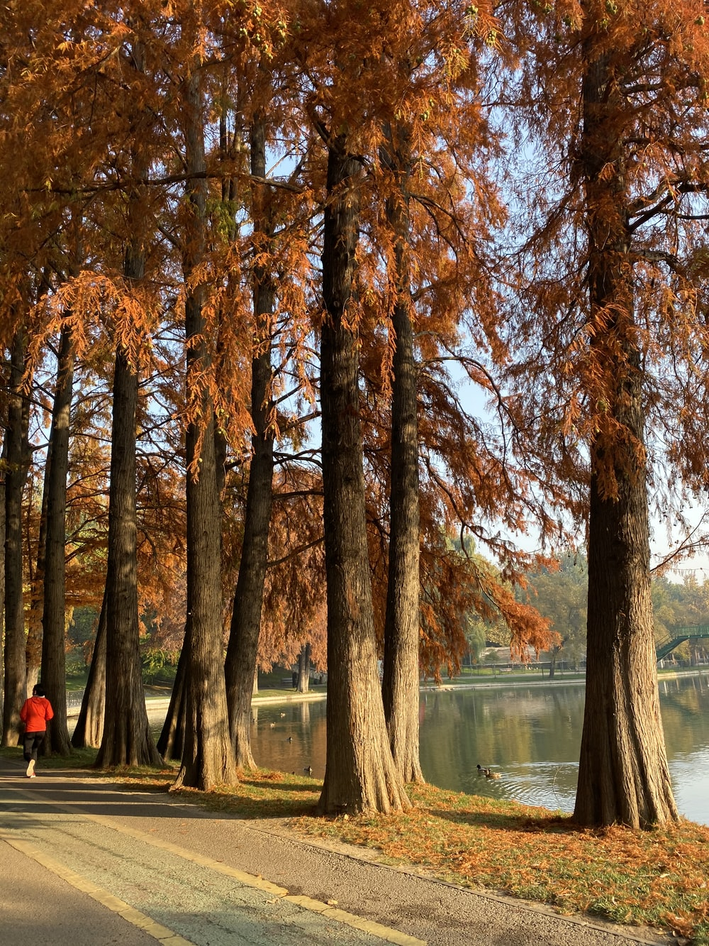 tall brown trees facing body of water
