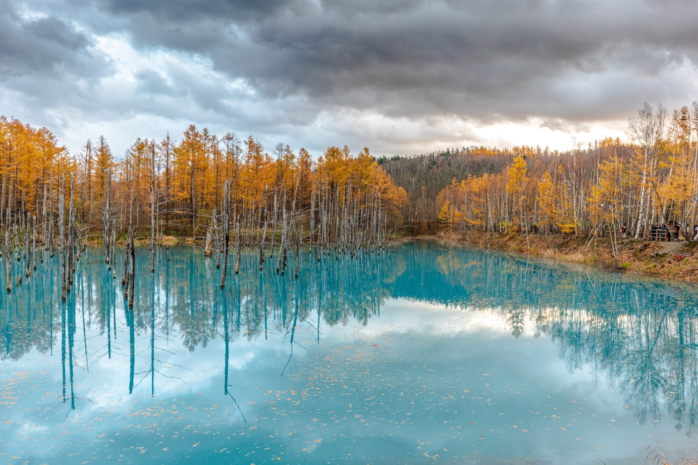 view photography of blue lake and brown trees under cloudy sky