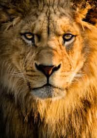 The Lion and the Mouse the lion and the mouse stories