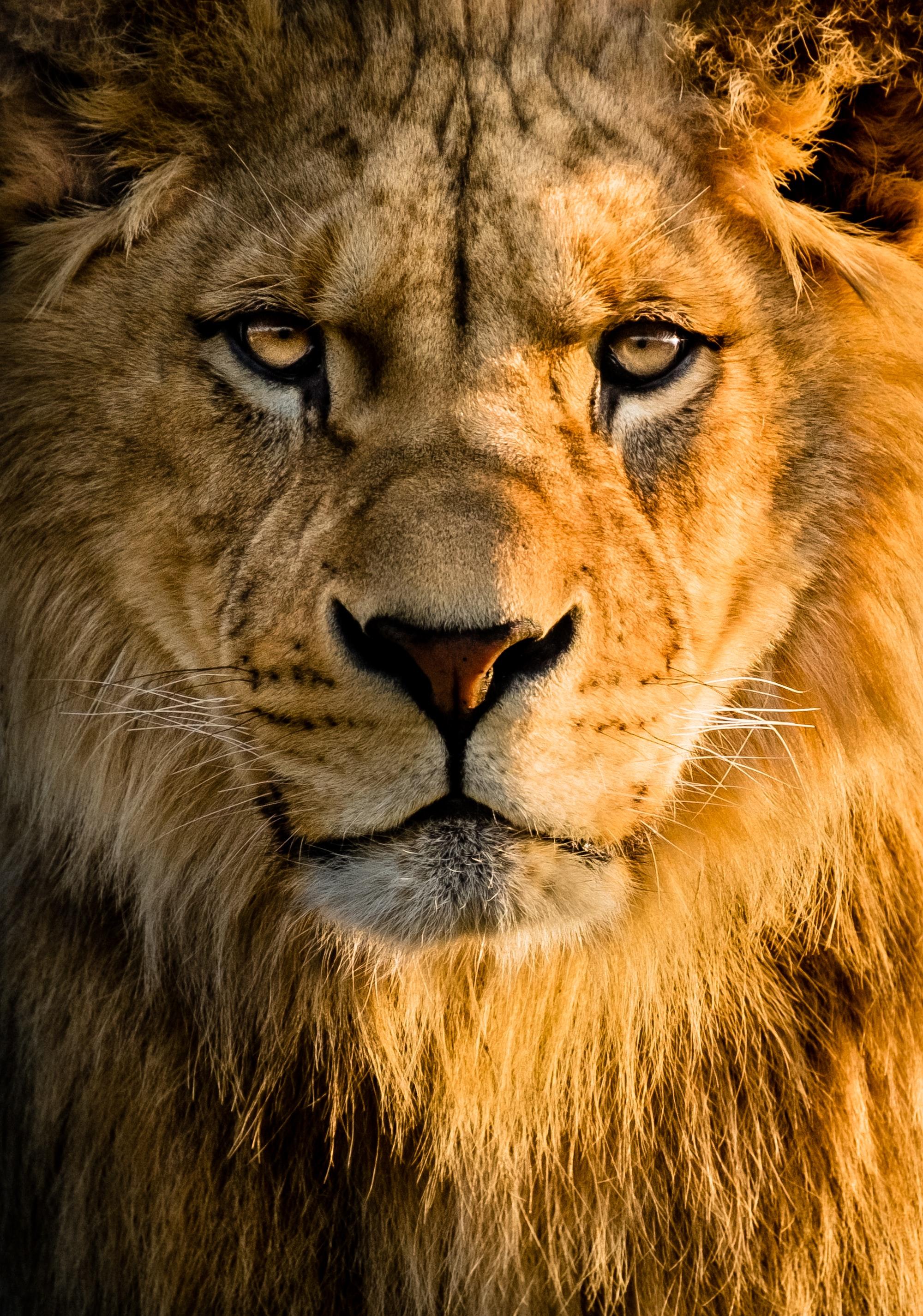 Aslan Kral ve Afrika Savanları Hakkındaki Yanlışlar