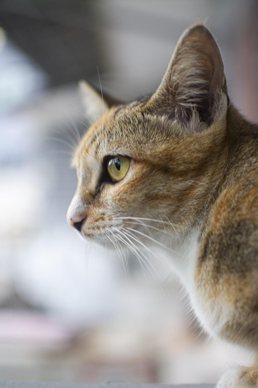 close-up photo of orange tabby cat
