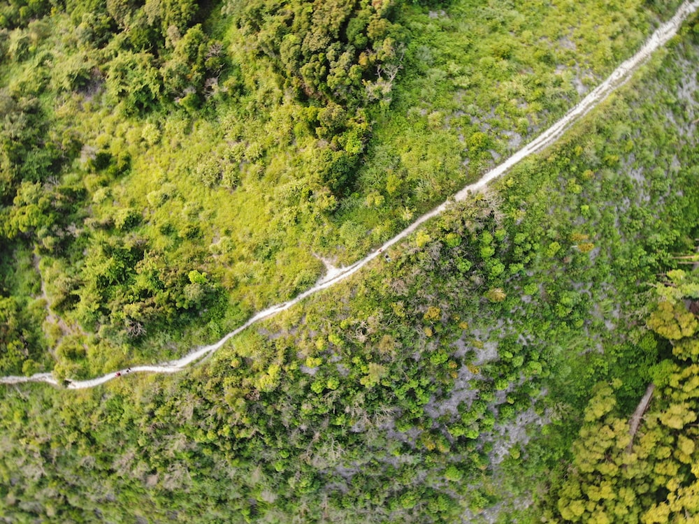 aerial photograph of forest photograph