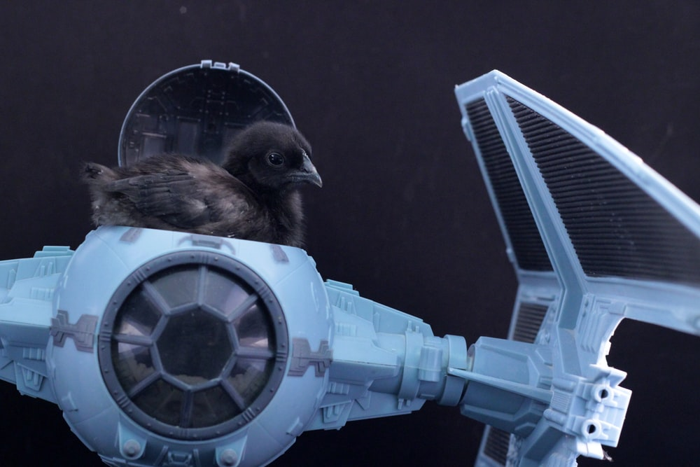 shallow focus photo of black bird riding TIE fighter scale model