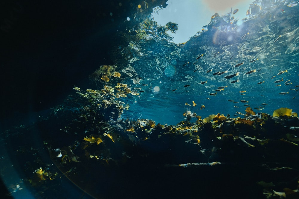 fishes swimming underwater during sunny day