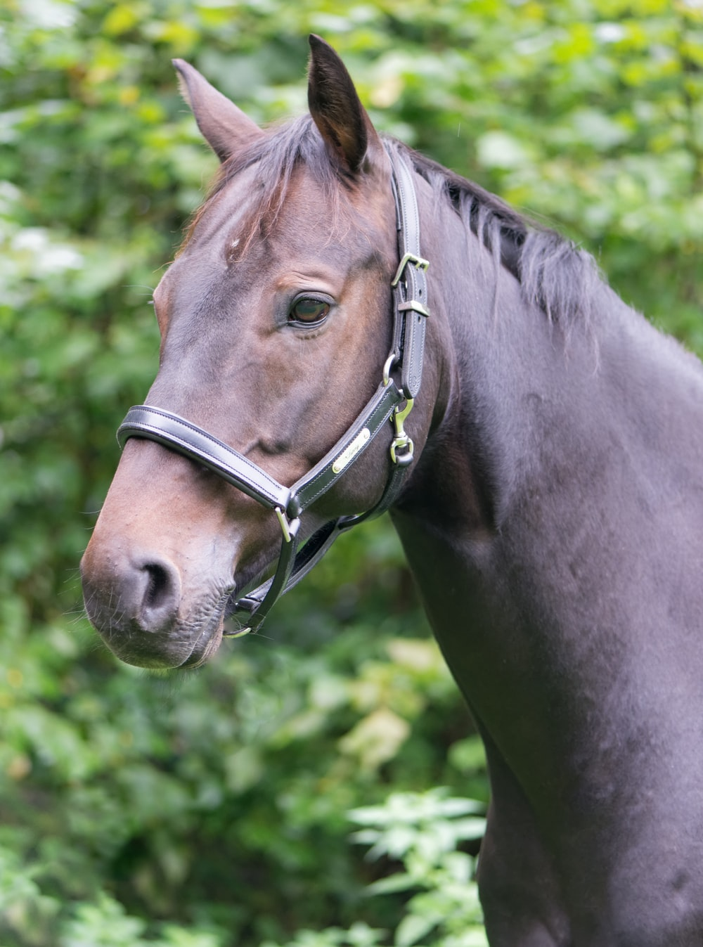 closeup photo of horse near trees