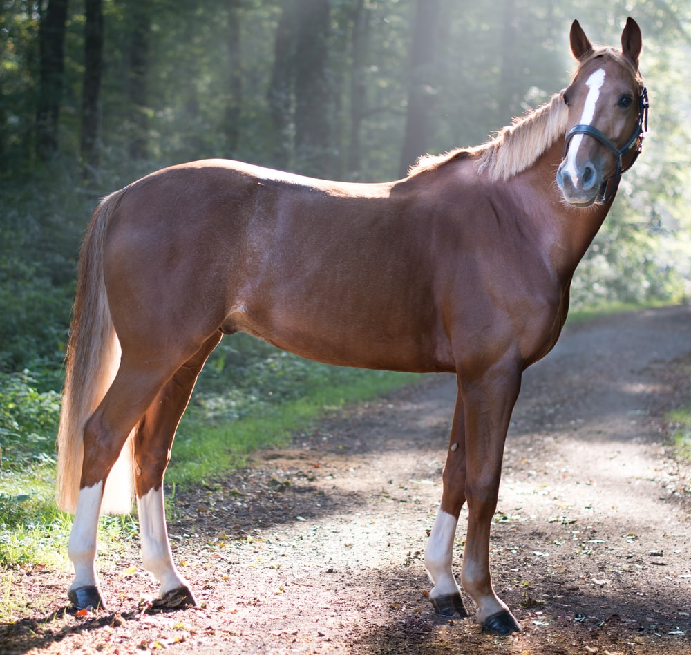 closeup photo of brown horse standing surrounded with trees