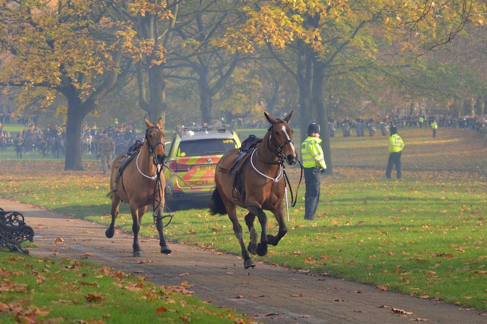 horses in park