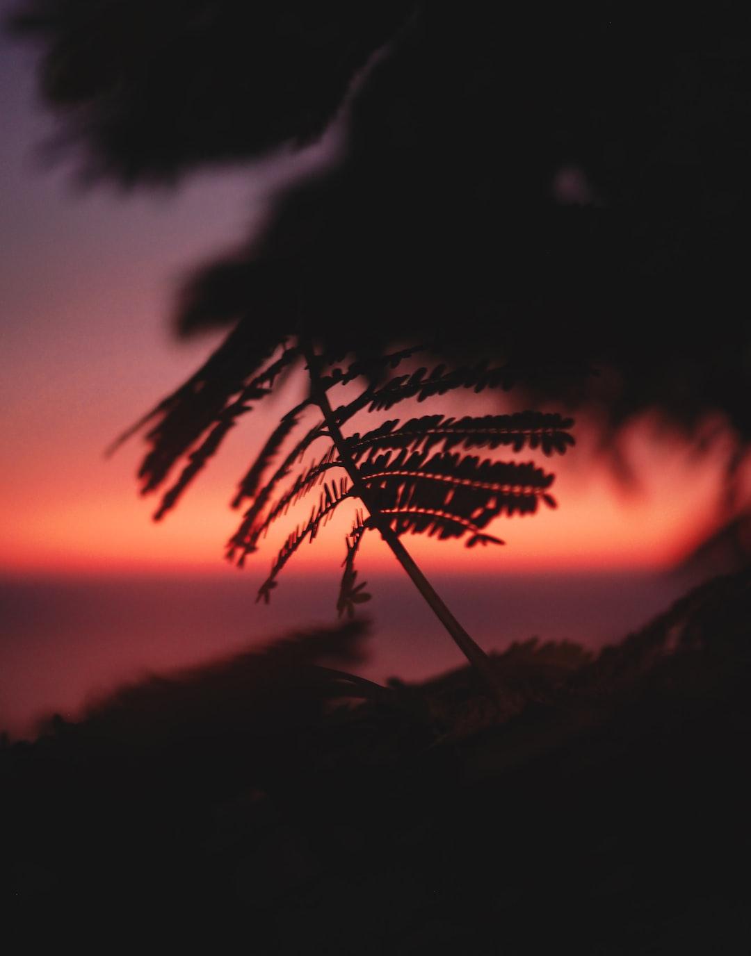enjoy this vibe. - blurry leaf, sunset