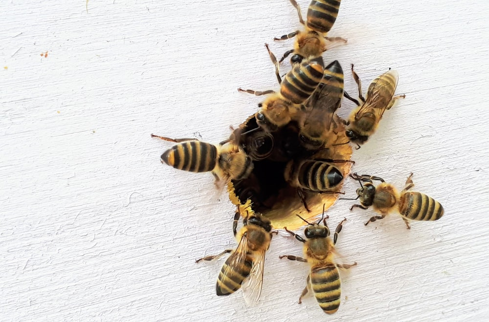 several bees