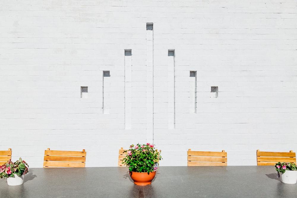 green plants beside white wall