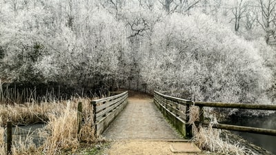 white trees near bridge during daytime