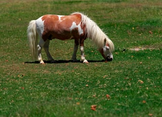 white and brown horse eating grasses