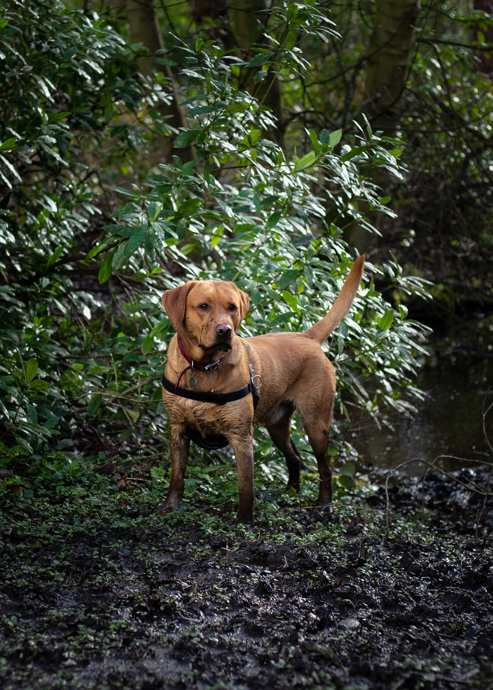 adult short-coated brown dog near green leaf plant
