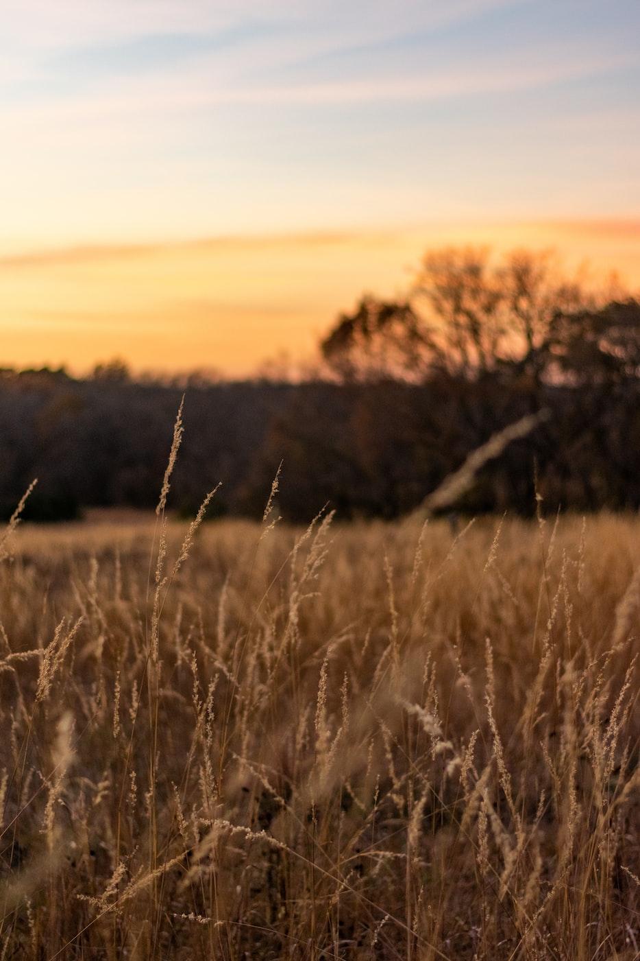 field of grass in Lexington, KY