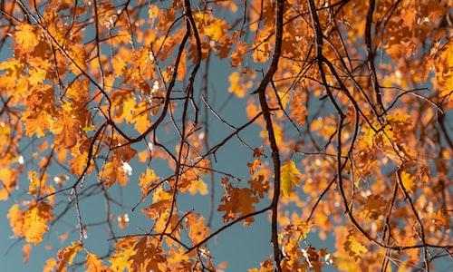 autumn pickup line
