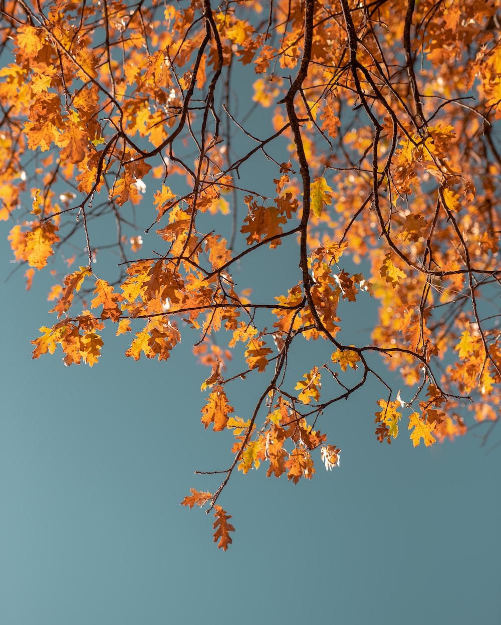 macro photography of orange leaf tree