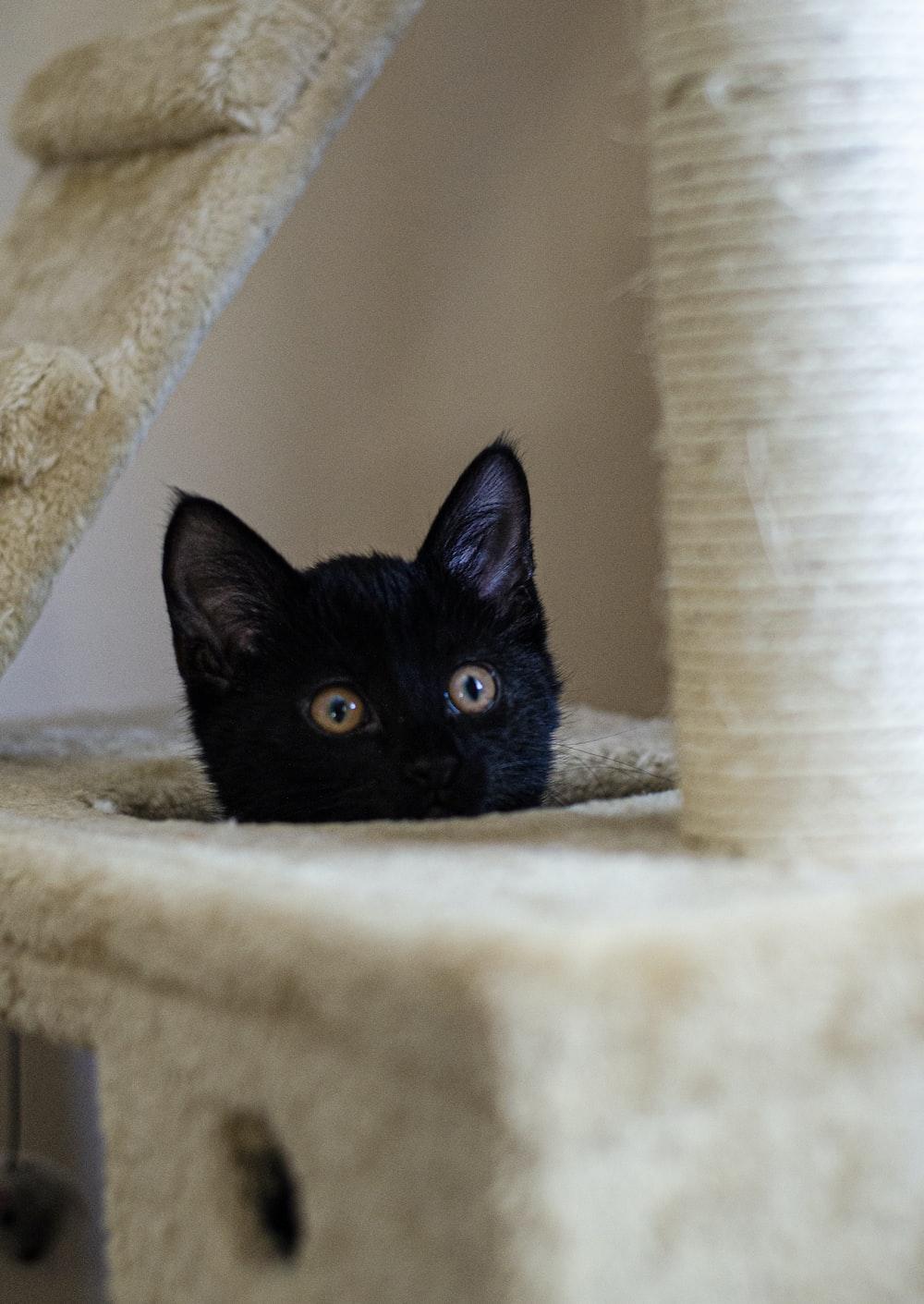 black cat in cat tree