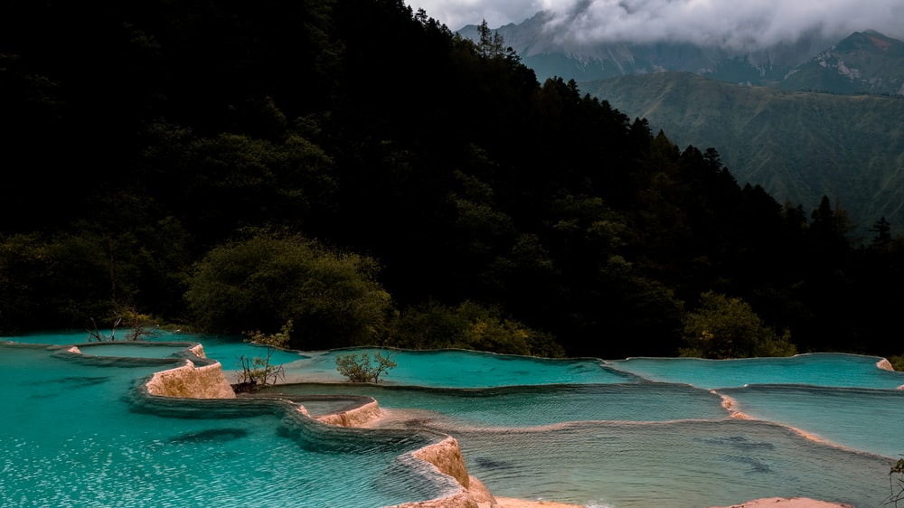 trees beside natural pool