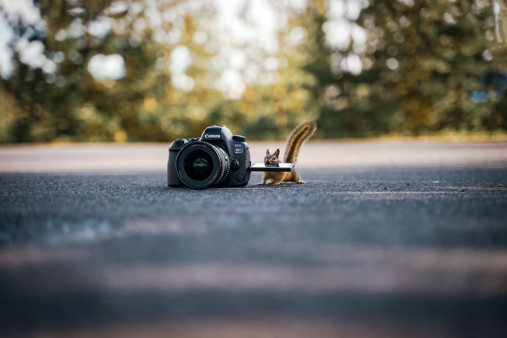 squirrel beside a black DSLR camera on the ground