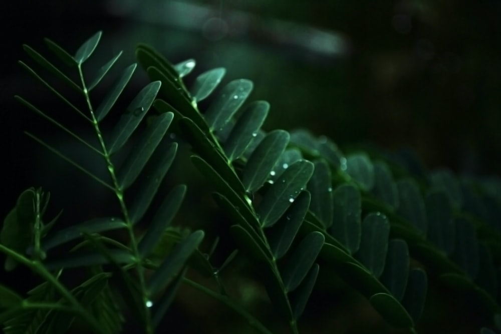 macro photography of water drops on green leaf plats
