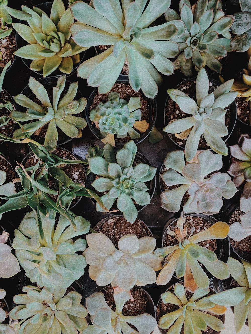 green succulent lot