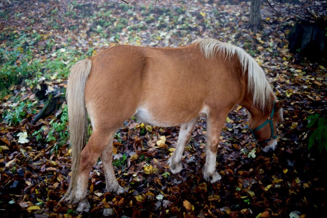 Little pony eating in a november morning