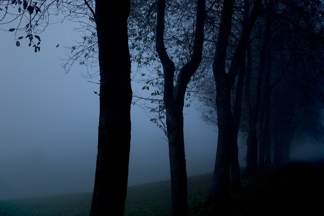 Trees in the mist.