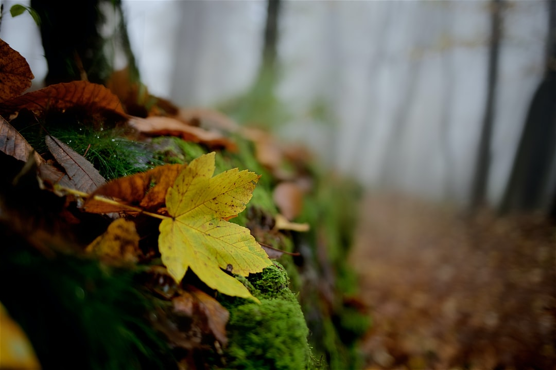 A solitary leaf in the heart of forest.