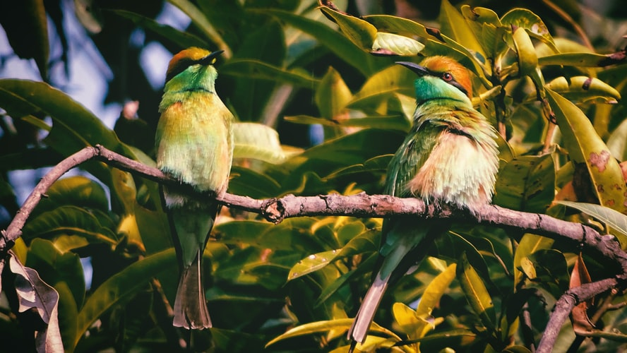 Bird watching in Andaman Islands