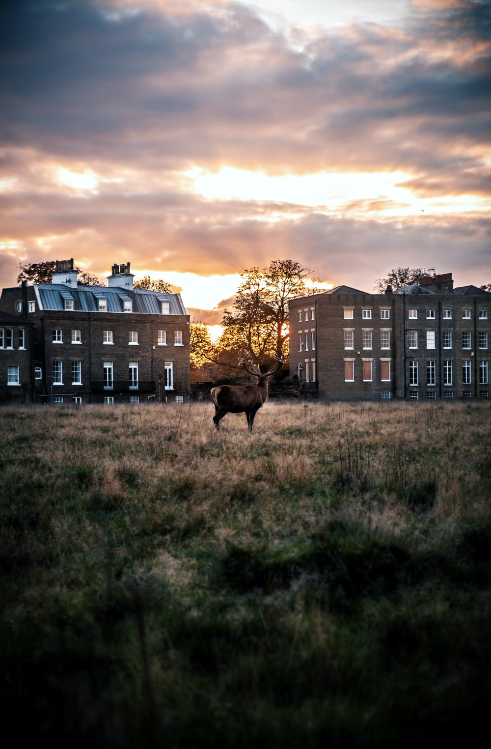 deer on grass field near buildings during day