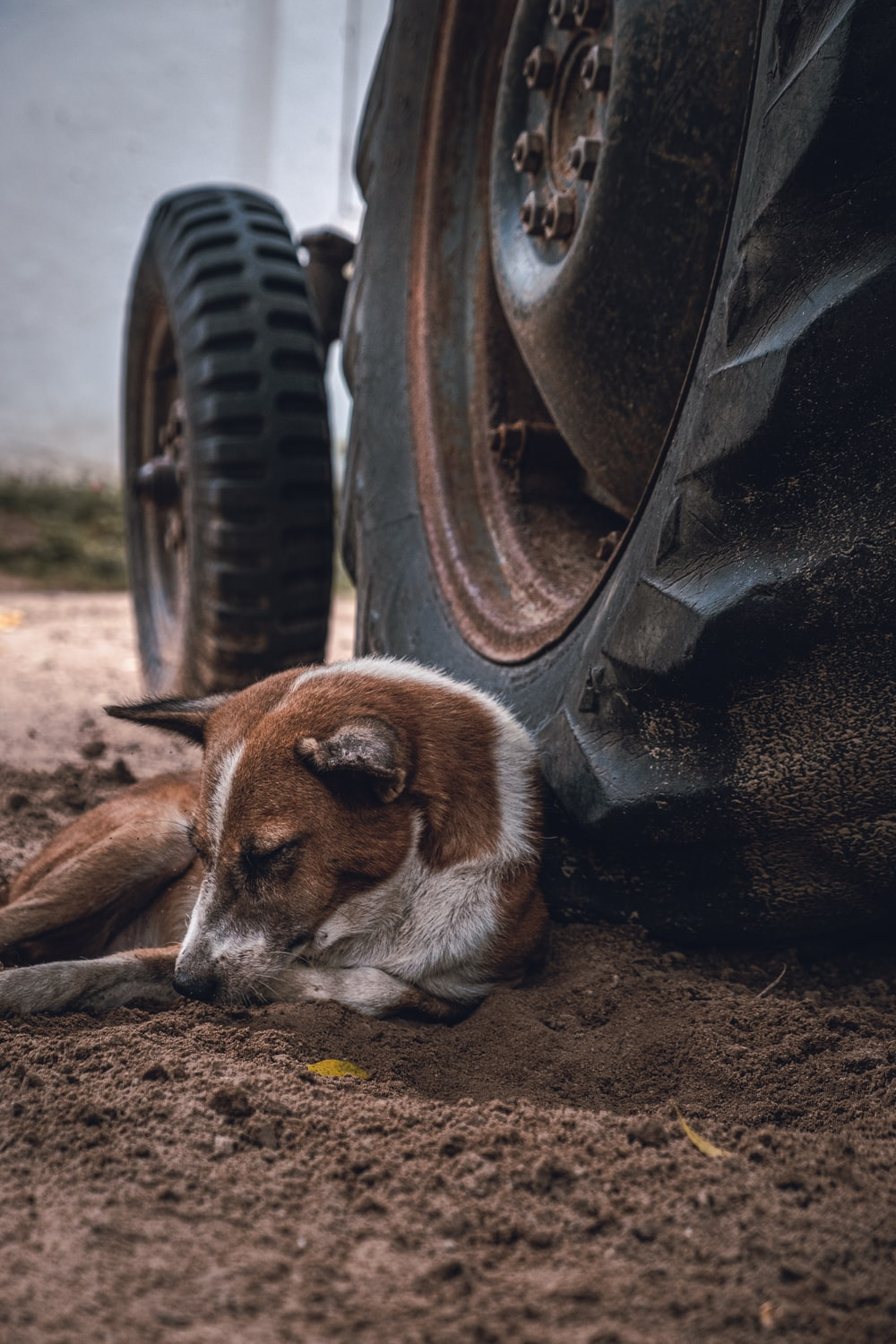 dog lying on bed near tire