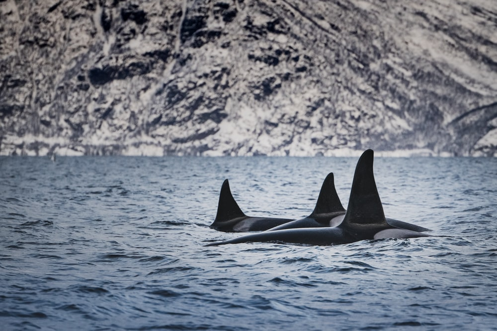 whales in water during daytime