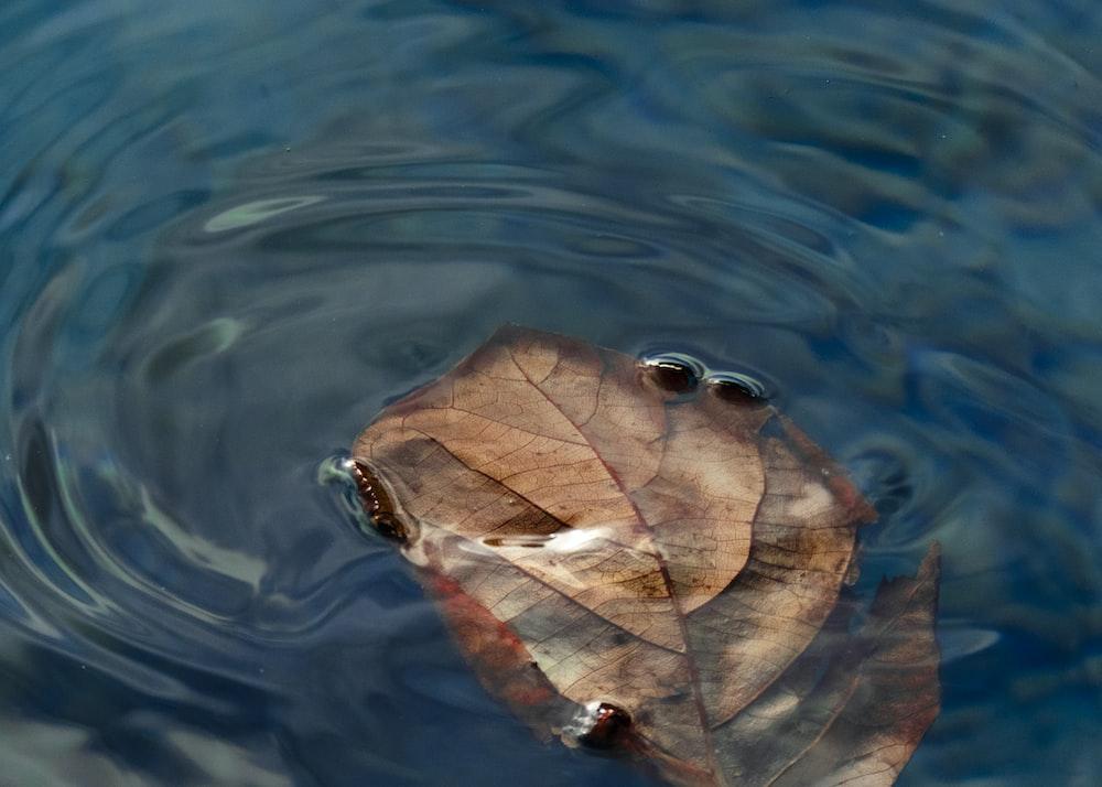 leaves float on water