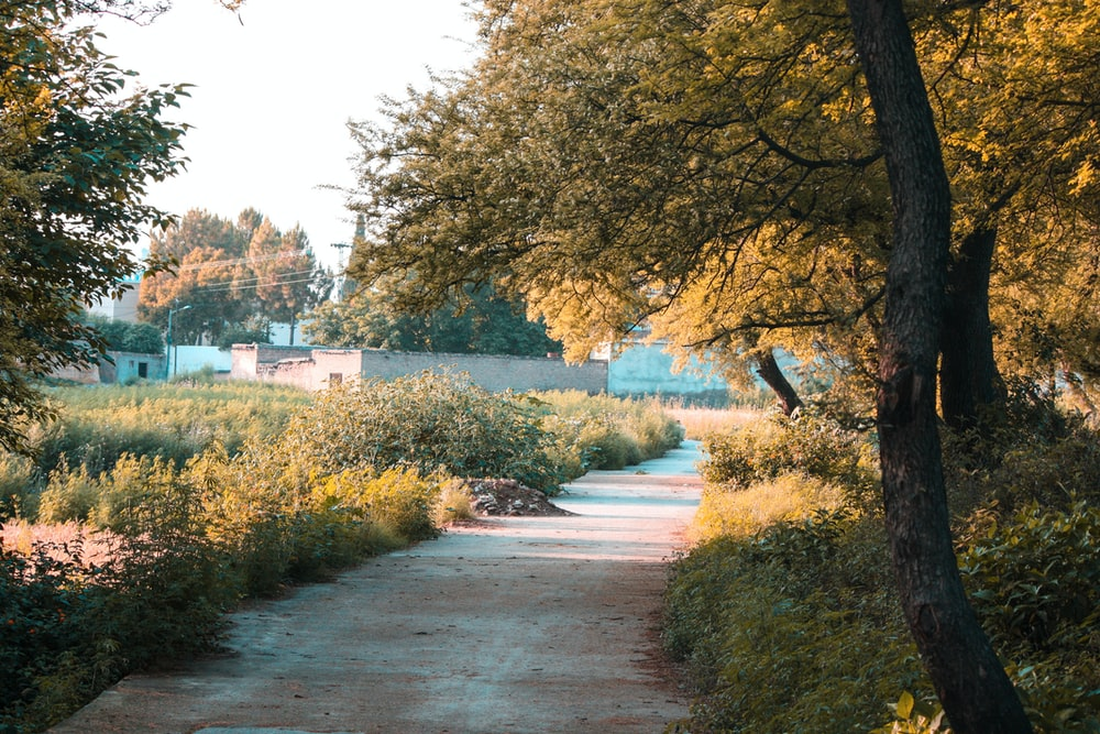 yellow leafy trees near road