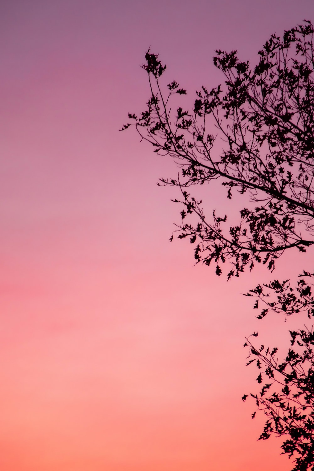 silhouette of tree during golden hour