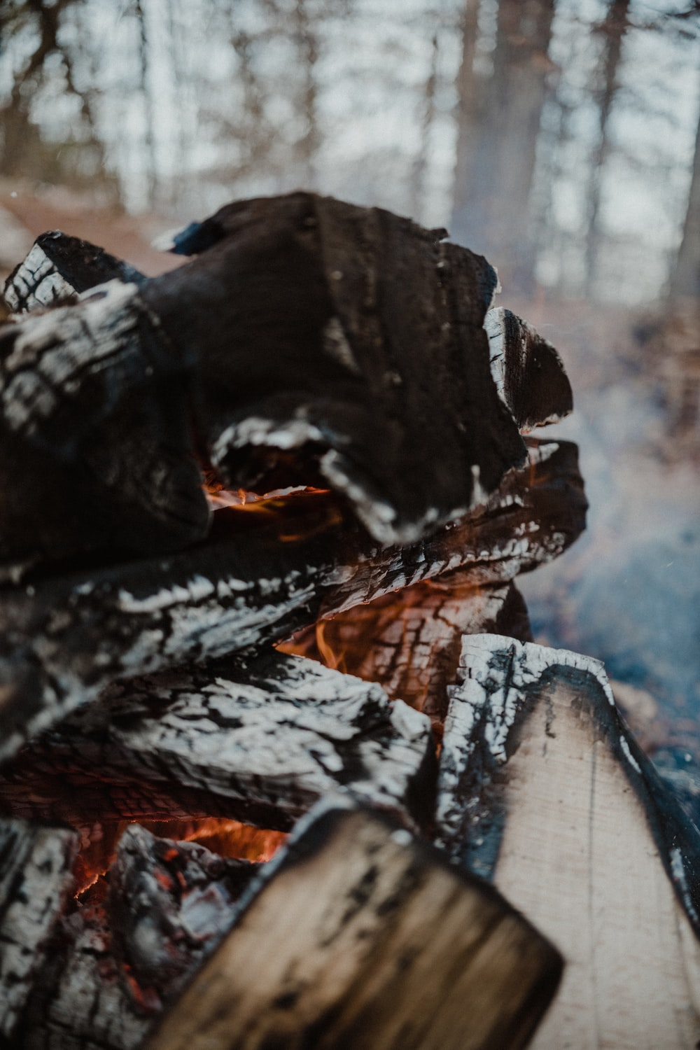 bonfire in forest