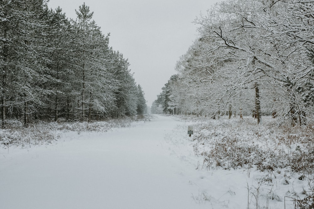 snow-covered lined trees during daytime