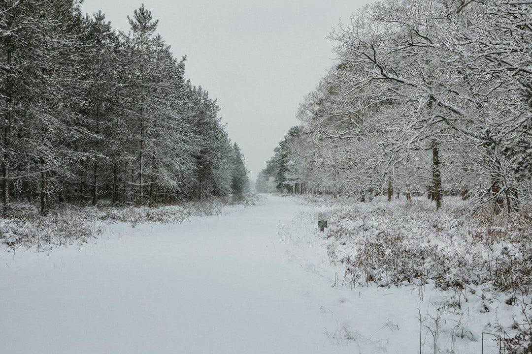 White Winter in the forest