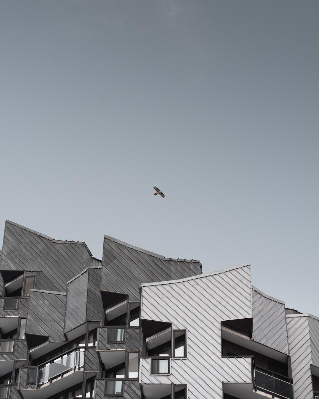 Gypaète Barbu and urban photography.