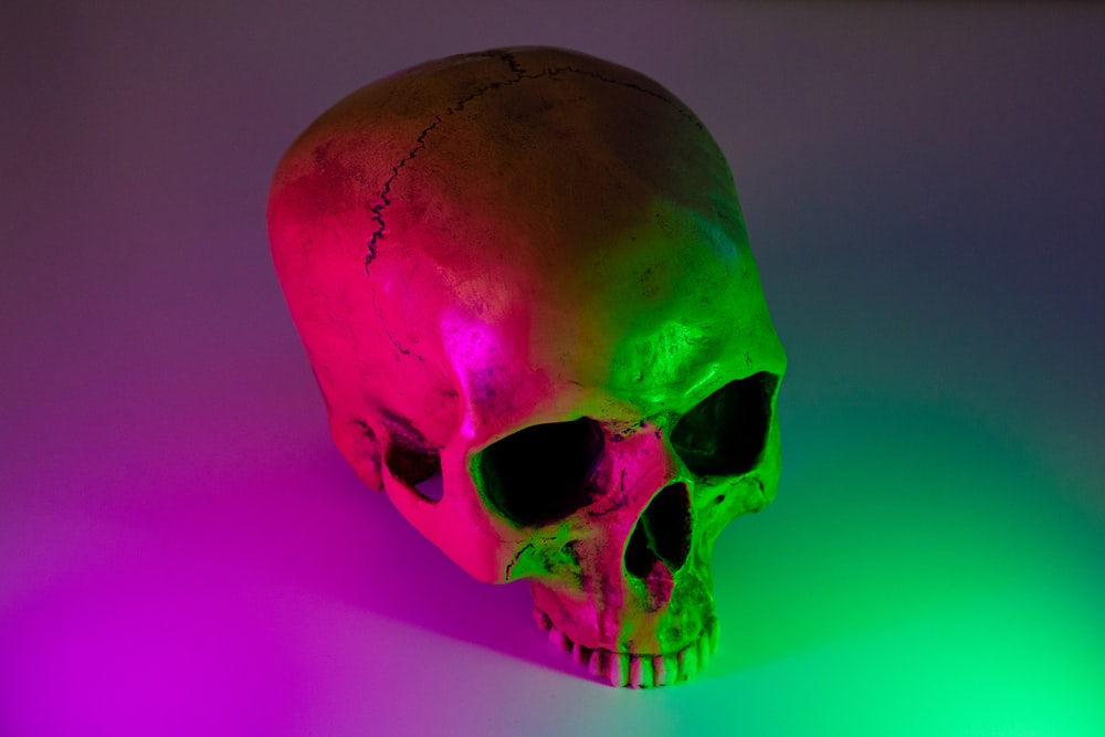 human skull on white surface