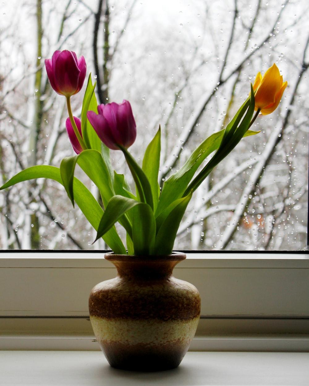 purple and yellow tulip flower