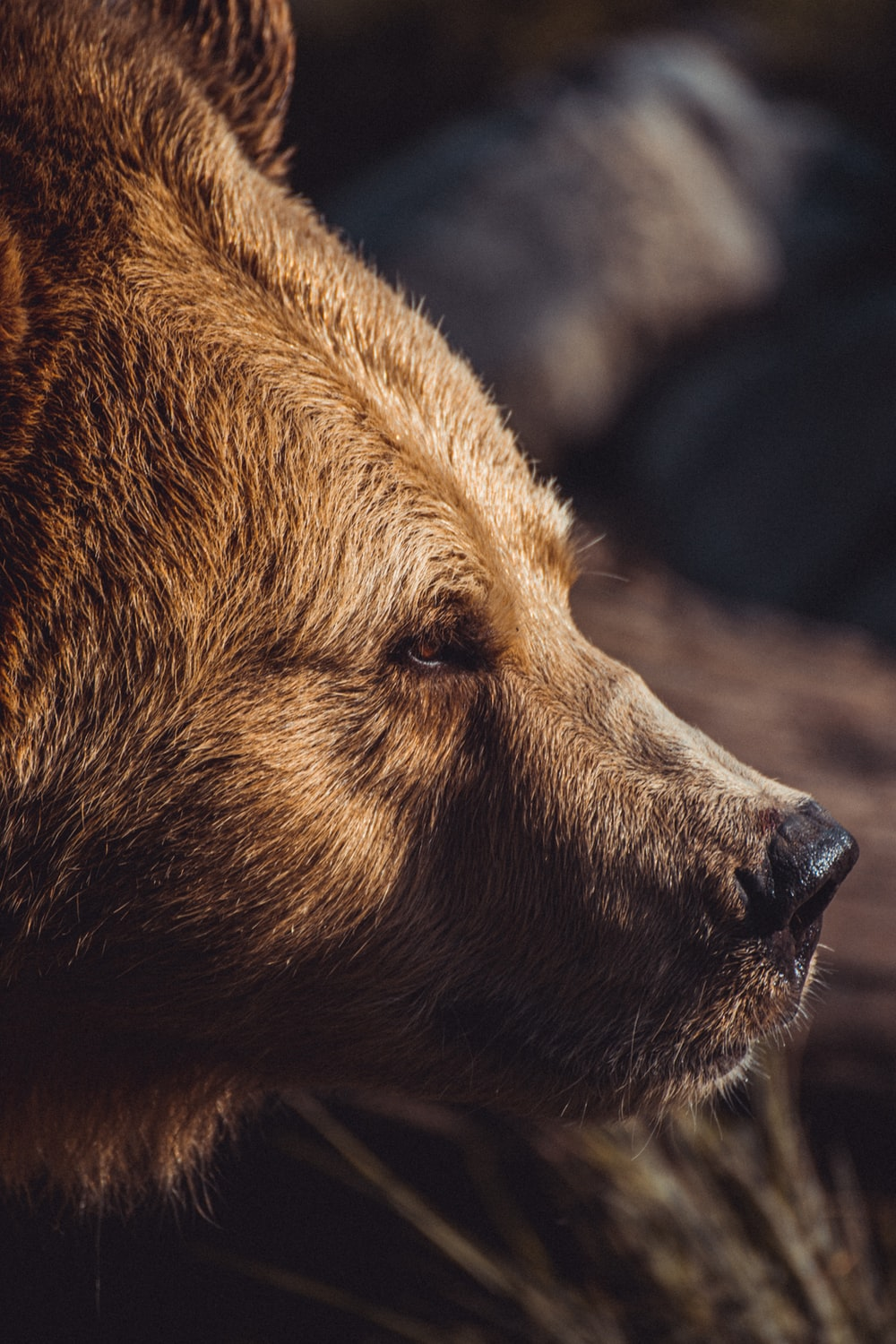 closeup photography of brown bear