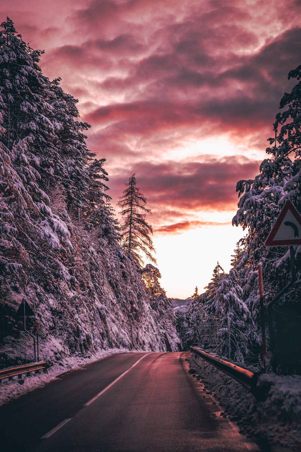 road beside snow covered trees during day