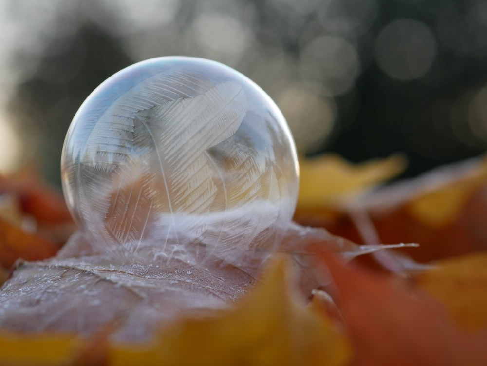 selective focus photography of dew drop on brown leaf
